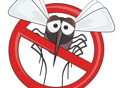 komar spb