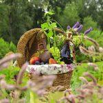 фестиваль овощей в павловске