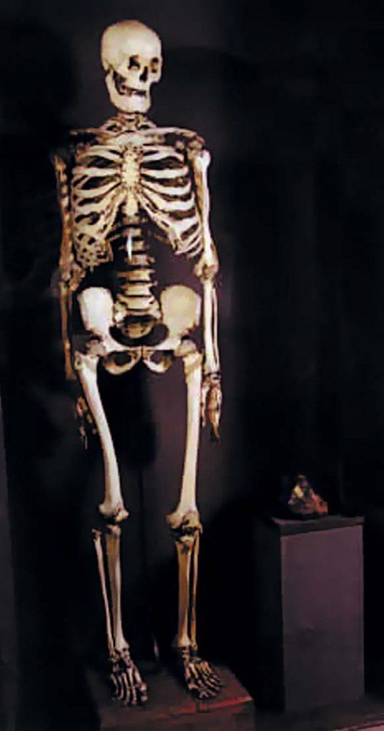 Один из экспонатов Кунсткамеры — скелет великана Николая Буржуа